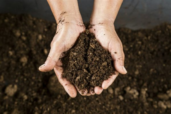 A person holding soil in the palm of their hand