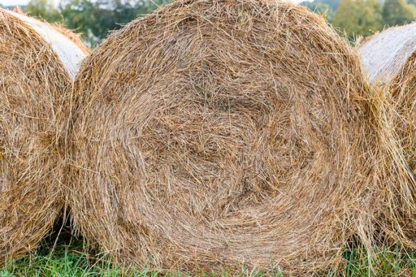 Hay Mineral Analysis